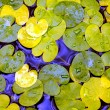 Water-plant foliage in water — Stock Photo