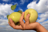 Two apples in hand — Stock Photo