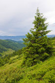 Green tree in mountains — Stock Photo