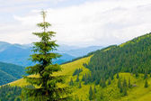 Mountain landscape with tree — Stock Photo