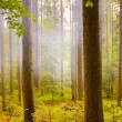 Stock Photo: Misty forests landscape