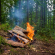 Stock Photo: Fire in forest