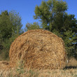 Haystack — Stock Photo #2971675