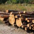 Stock Photo: Heap of fire-woods on forest glade