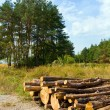 Foto Stock: Logs store neat forests clearing