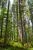 Lofty tree in forest — Stock Photo
