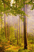 Smoke in forest — Stock Photo