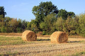 Two haystacks on field — Stock Photo