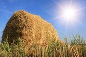 提出された日秋干し草の山 — ストック写真
