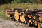 Heap of fire-woods on forest glade — Stock Photo