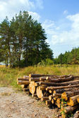 Logs store neat forests clearing — Stock Photo