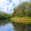 Stock Photo: Lake in forest