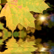 The autumn leafage — Stockfoto
