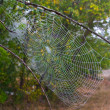 Web in morning forest — Stock Photo