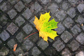 Autumn tree leaf on pavement — Stock Photo