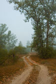 Rural road in foggy forest — Stock Photo