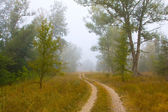Rural road in misty forest — Stock Photo