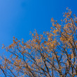 Stock Photo: Autumn branches