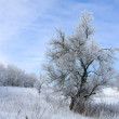 Winter landscape with tree — Stock Photo #3108011