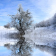 Winter landscape with tree — Stock Photo