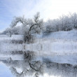 Winter landscape with tree — Stock Photo #3108028
