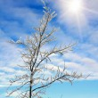 Branch on blue sky background with sun — Stock Photo