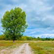 Road in steppe — Stock Photo #3108136