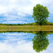 Stock Photo: Landscape with tree and water reflection