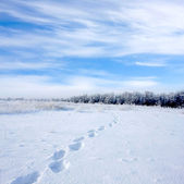 Footsteps on snowbound meadow — Stock Photo