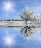 Kış ağaç donmuş gölün yakınında — Stok fotoğraf