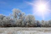 Sol o céu de inverno — Fotografia Stock