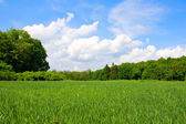 Green meadow in forest — Stock Photo