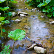 Forests stream among green plants — Stock Photo