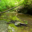 Foto Stock: River in forest