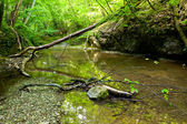 River in forest — Stockfoto