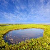 Küçük bir göl — Stok fotoğraf