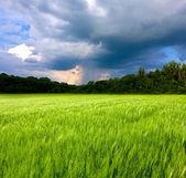Green meadow and thunderstorm — Stock Photo