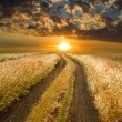Stock Photo: Road to sunset in steppe