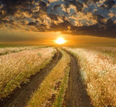 Road to sunset in steppe — Stock Photo