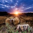 Sunset on forest clearing — Stock Photo #3723009