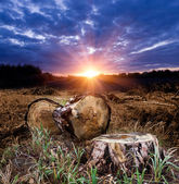 Sunset on forest clearing — Stock Photo