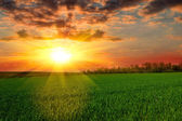 Tranquil sunset over green field — Stock Photo