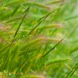 Grass in a meadow — Stock Photo