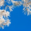 Pine branches in the snow — Stock Photo #2829238
