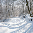 Winter in a forest — Stock Photo