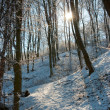 Winter in a forest — Stock fotografie