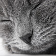 Grey kitten — Stock Photo #3188994