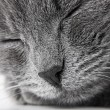 Stock Photo: Grey kitten