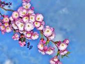 Flor — Foto Stock