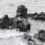 Rocky Shoreline — Stock Photo #2779856
